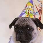 The Happy Birthday Pug